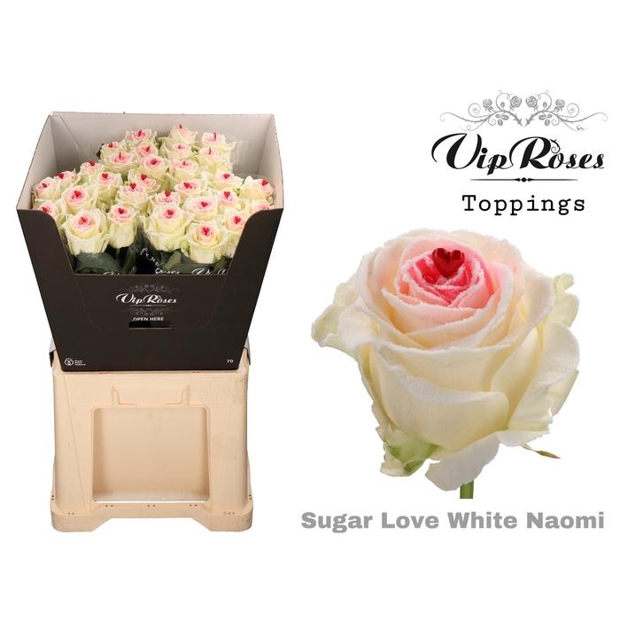 <h4>R GR SUGAR LOVE WHITE NAOMI</h4>