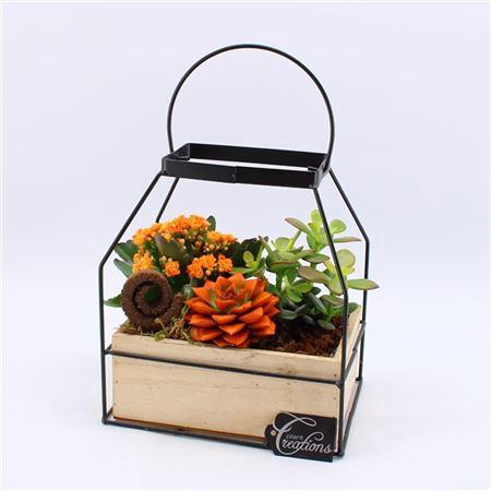 <h4>Hecr-2107or Autumn Essentials</h4>