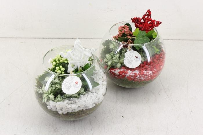 <h4>arr. PL - Glas bol - rood/wit</h4>