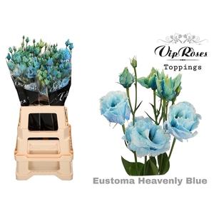 EUST G ALISSA HEAVENLY BLUE