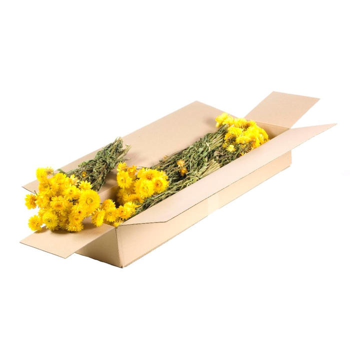 <h4>DRIED FLOWERS - HELICHRYSUM NATURAL YELLOW</h4>