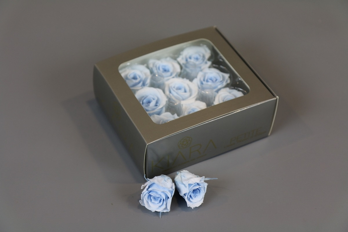 <h4>Rosa Preserved Baby Blue Petite</h4>