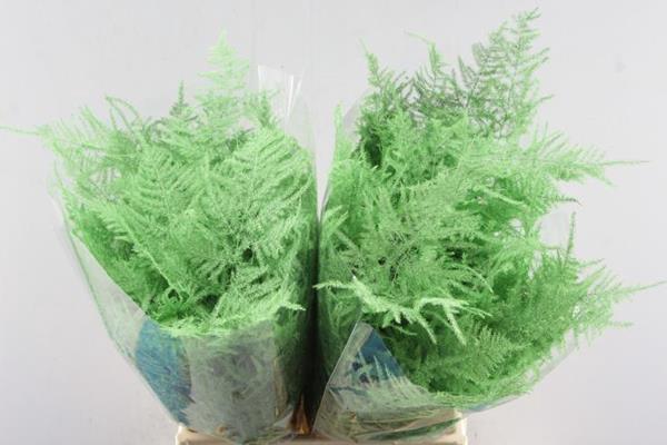 <h4>Asp 1e Veer Mint Groen</h4>