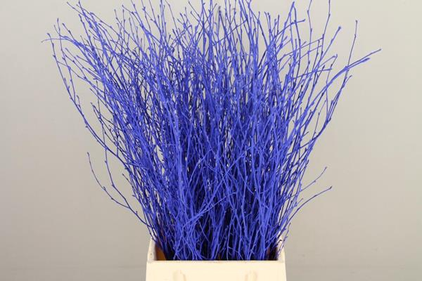 <h4>Betula Bs Paint Blue Fst</h4>