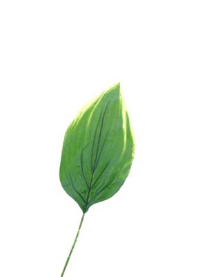 <h4>Af Hosta Leaf Single 24''</h4>
