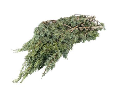 <h4>Cypresse 5kg</h4>