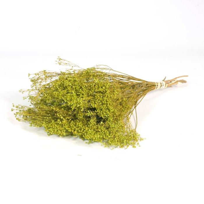 <h4>Broom bloom green</h4>