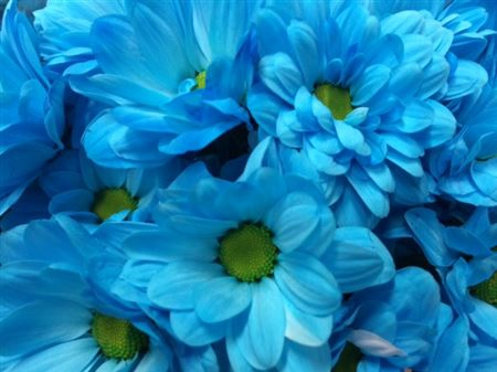 <h4>Chr T Bacardi Light Blue</h4>