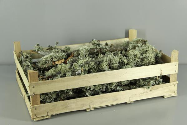 <h4>Branch Moss Natural Box</h4>