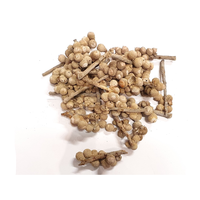 <h4>Acorn bunch 250gr in poly Frosted White</h4>