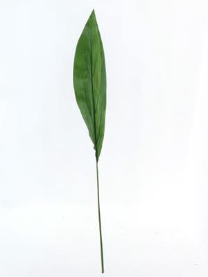<h4>Af Aspidistra Leaf Green Xl</h4>