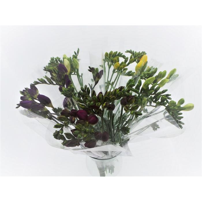 <h4>Bouquet Mono Freesia x10 + blad mix 50cm</h4>