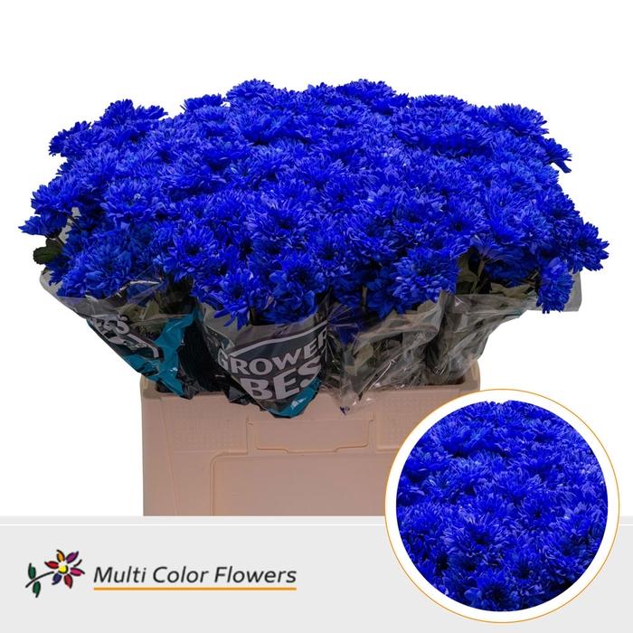 <h4>Chrys.tros Euro wit gekleurd Blauw donker</h4>