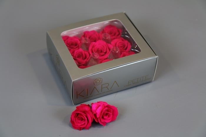 <h4>Rosa Preserved Hot Pink Petite</h4>