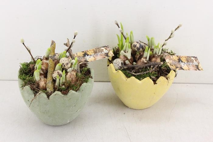 <h4>arr.. Narcis MB - Ker. ei hoog groen/geel</h4>