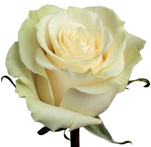 <h4>R Gr Mondial White 60cm EC</h4>