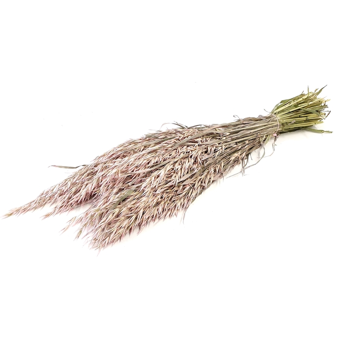 <h4>Avena per bunch Frosted Pink</h4>