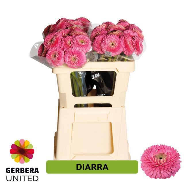<h4>GE MB DIARRA</h4>