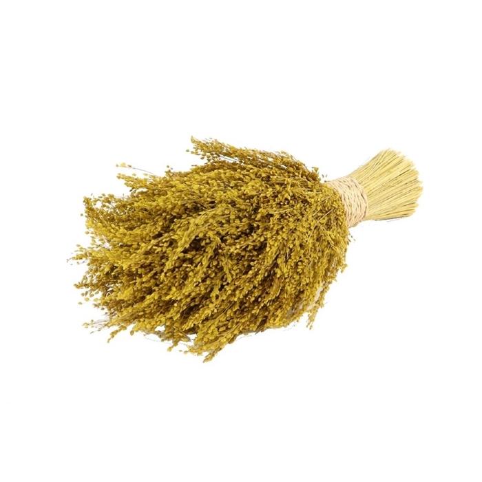 <h4>Droogbloem Stargrass 10*30cm</h4>