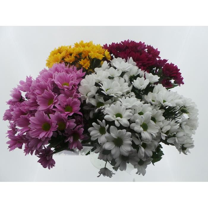 <h4>Bouquet Mono Chrys x5 mix 60cm</h4>