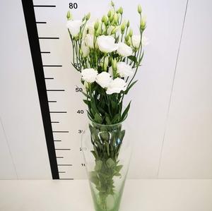 Lisianthus blanco Súper