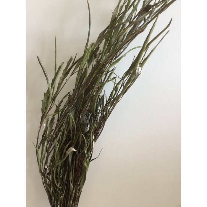<h4>DRIED FLOWERS - GREVILLEA GEVERFD NATURAL PER BOS</h4>