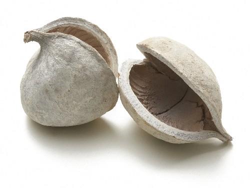 <h4>Dried articles Budha-nuts x6</h4>