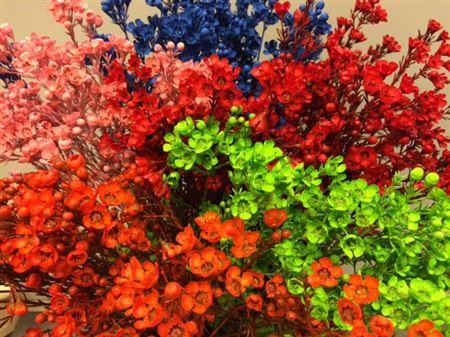 <h4>Wax Flower Mix</h4>