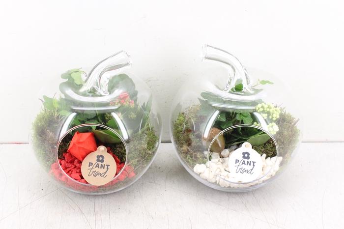 arr. PL - Glazen appel - rood/wit