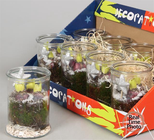 <h4>Arr Hyacinth glas</h4>