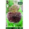 Z Allium Forelock