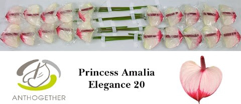 <h4>ANTH A PR A ELEGANCE 20.</h4>
