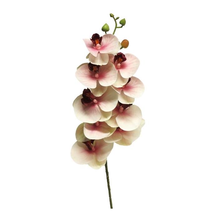 <h4>SILK FLOWERS - PHALAENOPSIS SPRAY BORA PINK 77CM</h4>