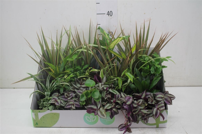 <h4>Plant Mix Mini Origin</h4>