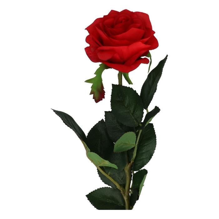 <h4>Silk Roos 75cm</h4>
