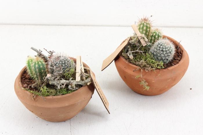 <h4>arr. MB Cactus - Terra cotta schaal</h4>