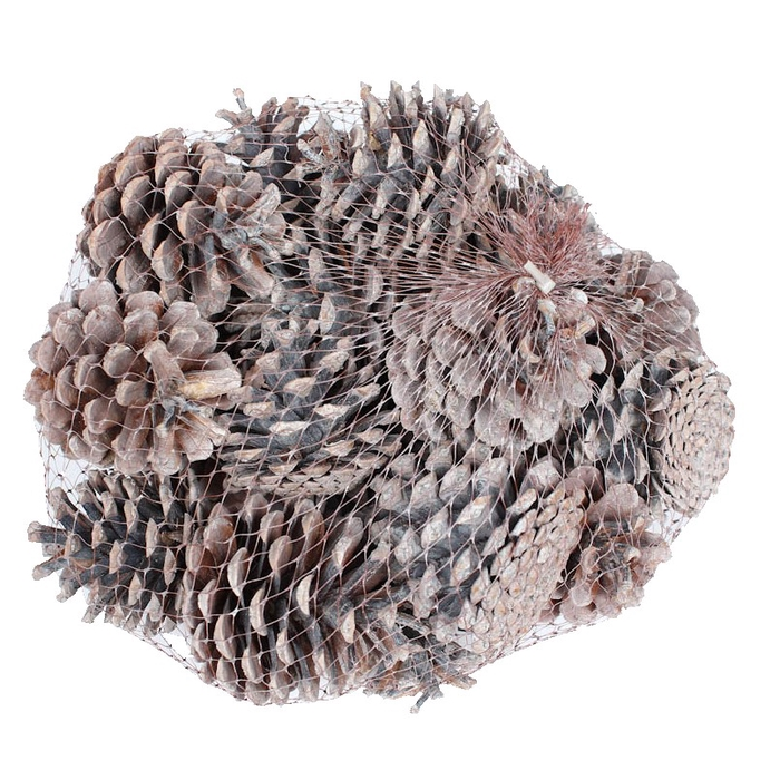 <h4>Pine cone 500gr in net frosted white</h4>