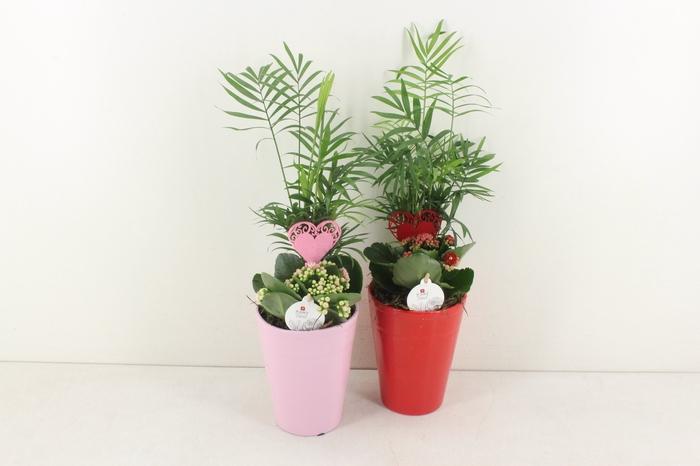 <h4>arr. PL - Ker. pot mix 236/6 - rood/roze</h4>