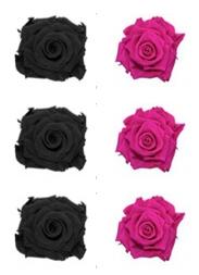 <h4>R Gr Prsv Black - Hot Pink</h4>