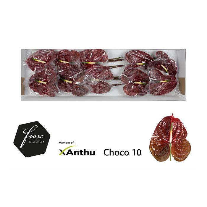 <h4>ANTH A CHOCO</h4>