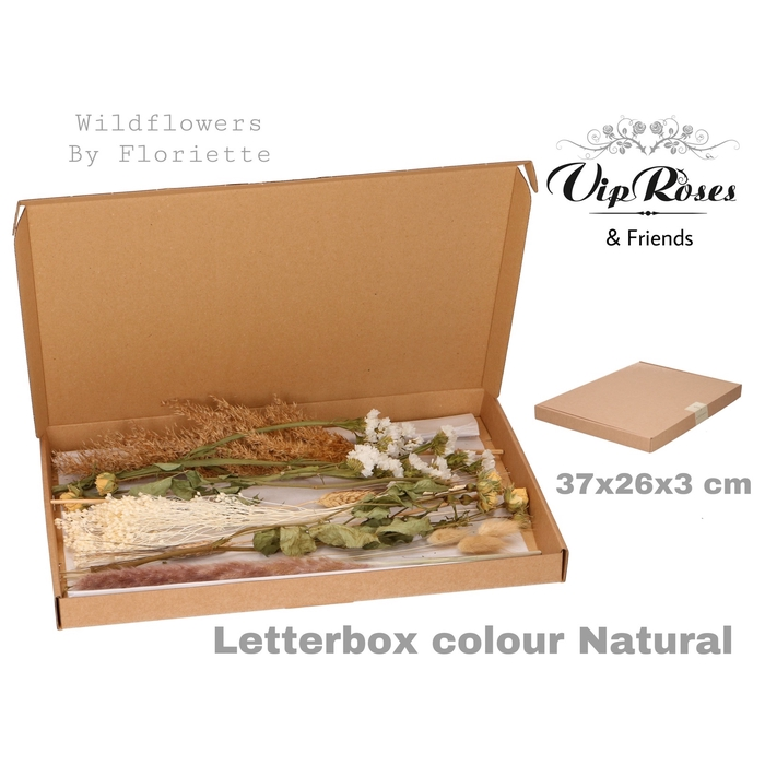 <h4>DRIED LETTERBOX NATUREL</h4>