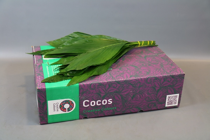 <h4>Cocos X-Large Creative Colours</h4>