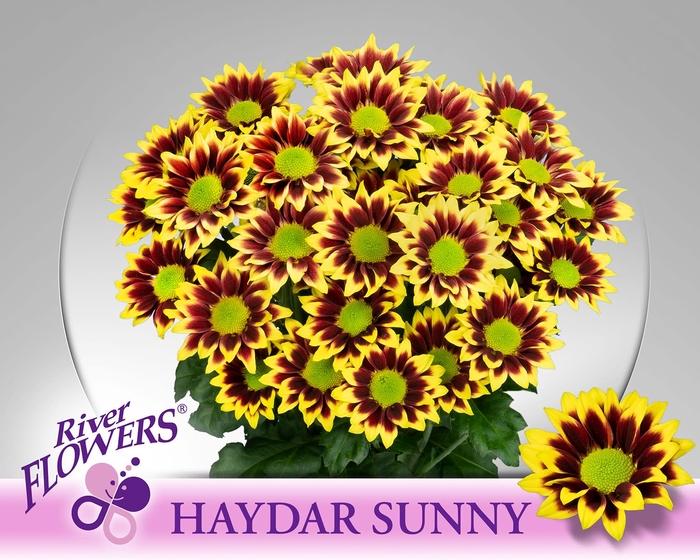 <h4>CHR T HAYDAR SUNNY</h4>
