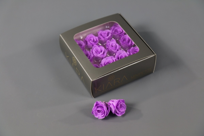 <h4>Rosa Preserved Baby Lily Mini Petite</h4>
