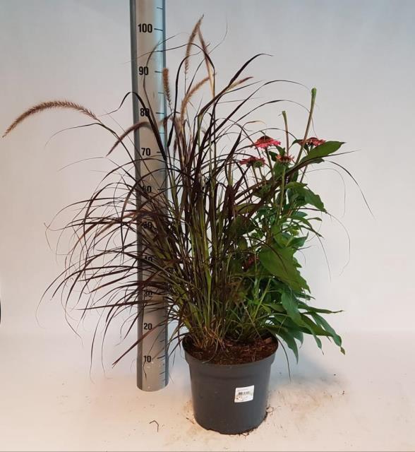 VASTE PLANT GEM 2 SO
