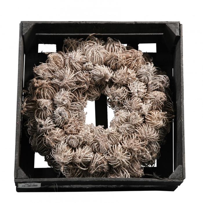 <h4>Wreath d35cm Ammi Majus wax</h4>