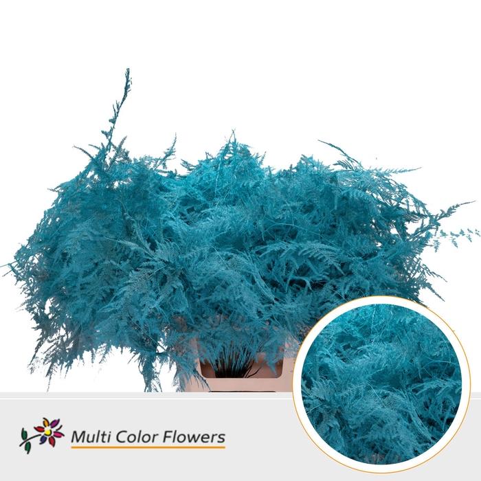 <h4>Asparagus extra veren gekleurd Blue ice</h4>