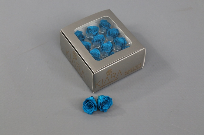 <h4>Rosa Preserved Aquamarine Mini Petite</h4>
