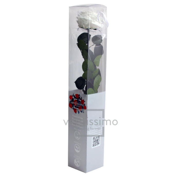 Roos op steel xl Plexi 55cm White