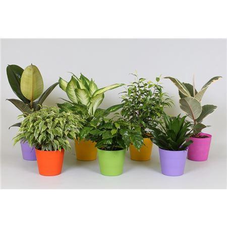 <h4>Ov Kamerplanten Gemengd Plastic Gekleurd</h4>